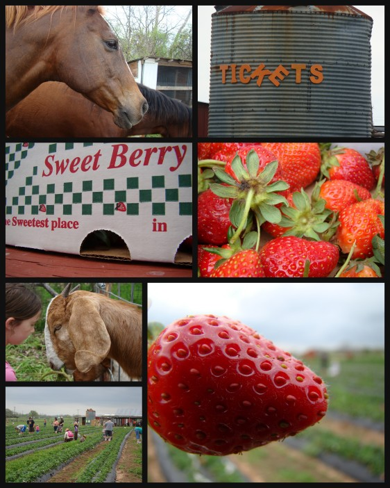 Sweet Berry Farm Dripping Springs