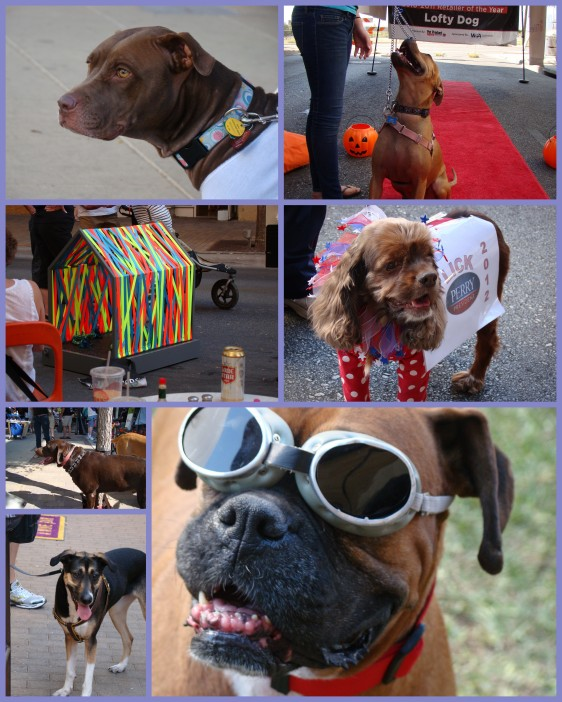 Barkitecture Pet Rescue Festival Austin