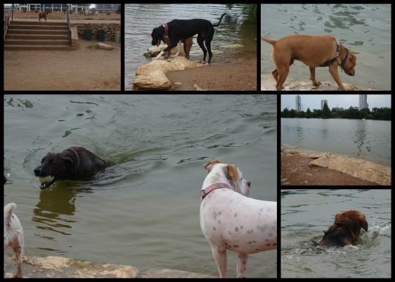 Auditorium Shores  Dog Park in Austin Texas