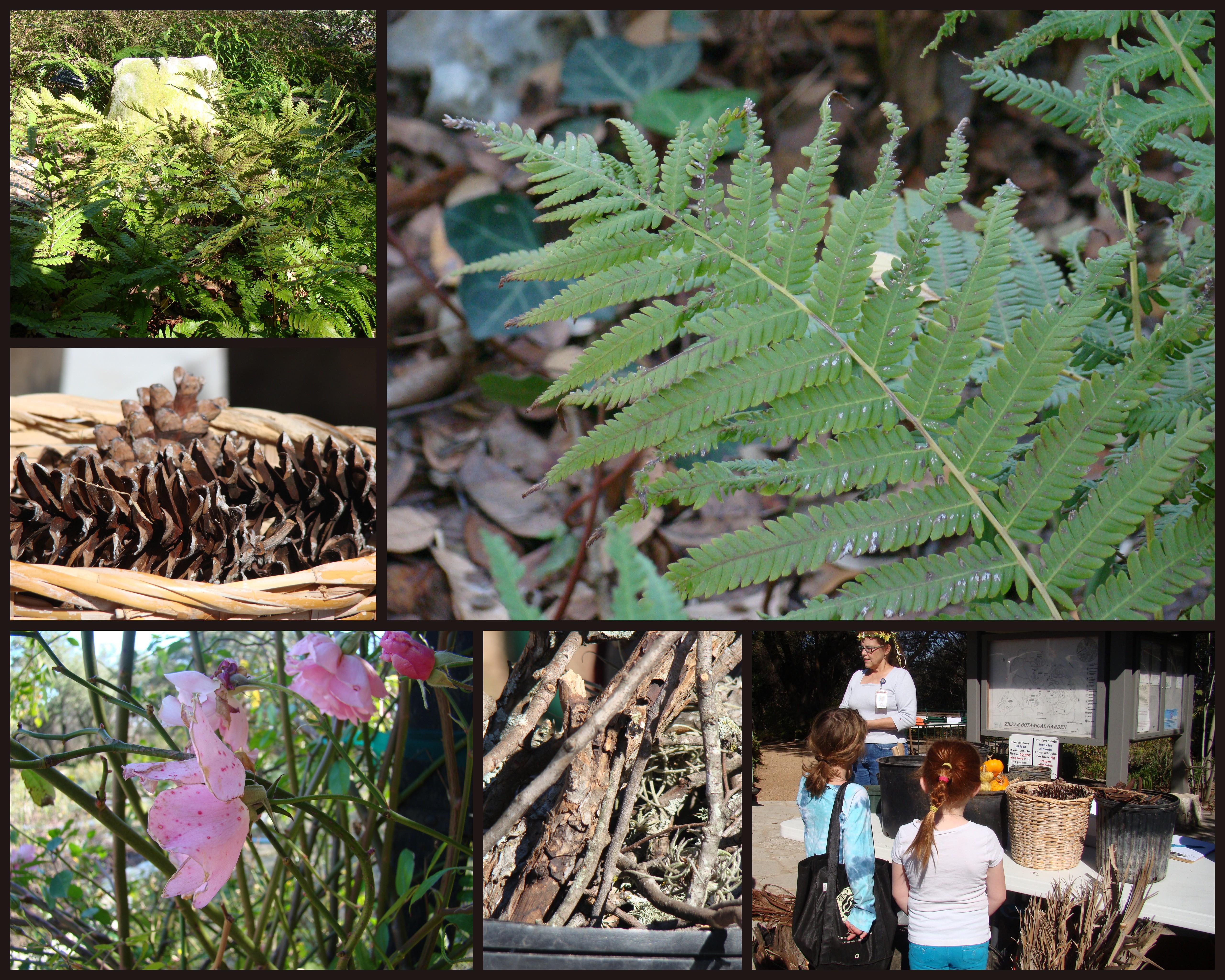 Zilker Botanical Gardens Faerie House Workshop
