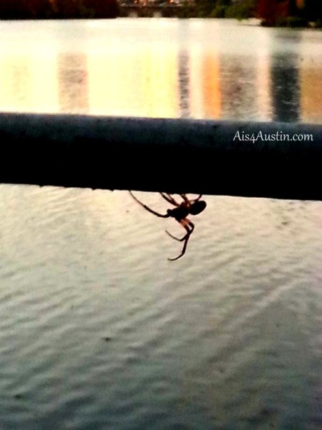Spider on railing